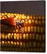 Beetle On Corn Ear Canvas Print