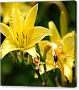 Beetle Resting On Yellow Lily Flower Canvas Print