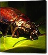 Beetle With Powerful Mandibles Canvas Print