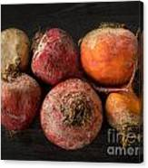 Beets In Different Colors On A Dark Background Canvas Print