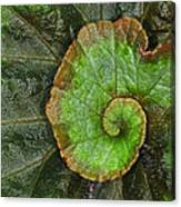Begonia Leaf Canvas Print