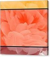 Begonia Petals Triptych Canvas Print