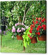 Begonias On Line Canvas Print