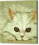 Beguiling Eyes Canvas Print