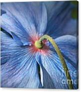 Behind The Blue Poppy Canvas Print