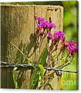 Behind The Fence Canvas Print
