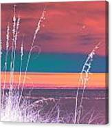 Behind The Sea Oats Canvas Print