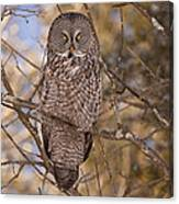 Being Observed Canvas Print