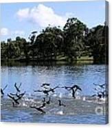 Belconnen Lake Canvas Print