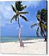 Beautiful Belize Palms Canvas Print