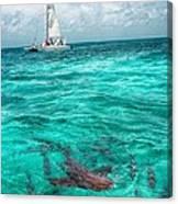 Belize Turquoise Shark N Sail  Canvas Print