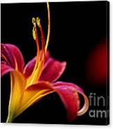 Belladonna Lily Canvas Print