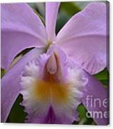 Belle Isle Orchid Canvas Print
