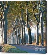 Beloved Plane Trees Canvas Print