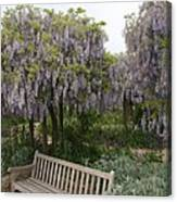 Bench And Wisteria Canvas Print
