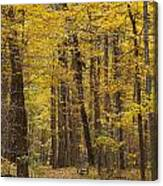Bench In Fall Color Canvas Print