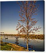 Lonely Friends - Bench And Tree Canvas Print
