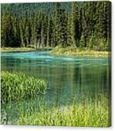 Bend In Mistaya River Canvas Print