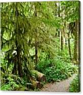 Bend In The Rainforest Canvas Print