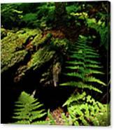 Beneath The Trees - Blue Ridge Mountains Canvas Print