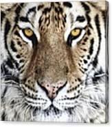 Bengal Tiger Eyes Canvas Print