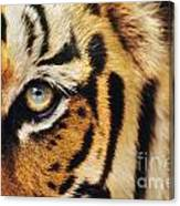 Bengal Tiger Face Canvas Print