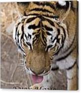 Bengal Tiger Greeting Card Canvas Print