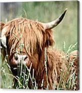 Bent Horn Long Horn Canvas Print