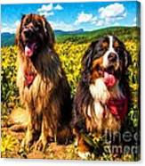 Bernese Mountain Dog And Leonberger Among Wildflowers Canvas Print