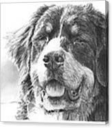 Bernese Mountain Dog Pencil Portrait Canvas Print