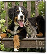 Bernese Mountain Puppy & Kitten Canvas Print