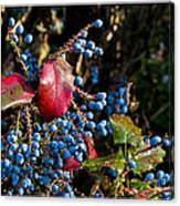 Berries And Red Leaves After The Rain Canvas Print