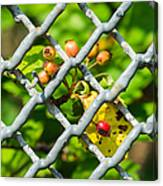 Berries And The City - Featured 3 Canvas Print