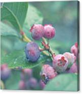 Berries For You Canvas Print