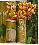 Berries On Bamboo Hawaii Canvas Print