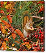 Berry Loving Squirrel Canvas Print