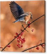 Berry Picking Bluebird Canvas Print