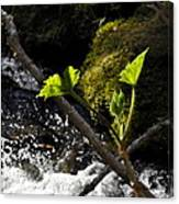 Beside The Waterfall Canvas Print