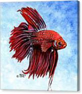 Betta-big Red Canvas Print