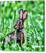 Better Get Started On Those Easter Eggs Canvas Print