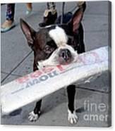 Betty The News Dog Canvas Print