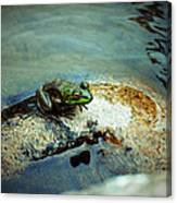 Between A Frog And A Hard Place Canvas Print