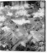 Between Black And White-14 Canvas Print