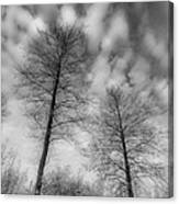 Between Black And White-30 Canvas Print