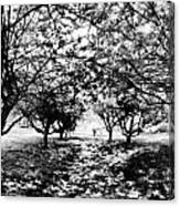 Between Trees II Canvas Print