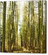 Betweenthe Trees Canvas Print