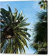 Beverly Palms Canvas Print