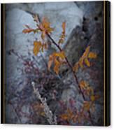 Beware The Thorns Canvas Print