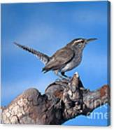 Bewicks Wren Canvas Print