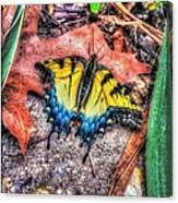 Beyond Chrysalis-tiger Swallowtail Canvas Print